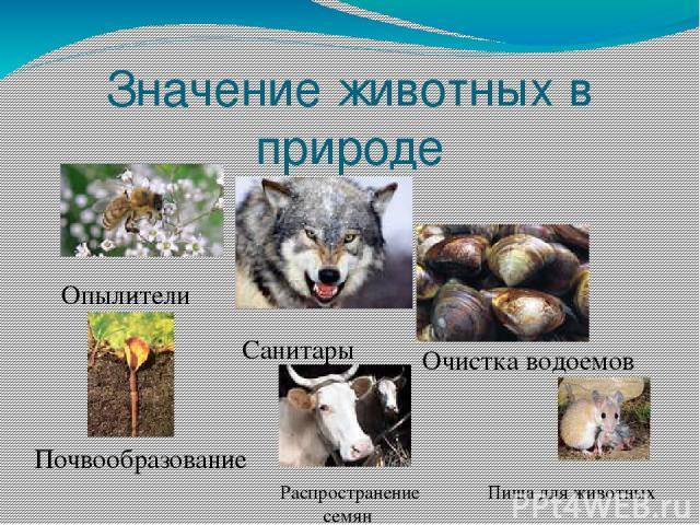Значение животных в природе Опылители Санитары Очистка водоемов Почвообразование Распространение семян Пища для животных