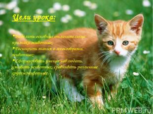 Цели урока: Выделить основные отличительные признаки животных; Расширить знания