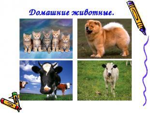 Домашние животные.