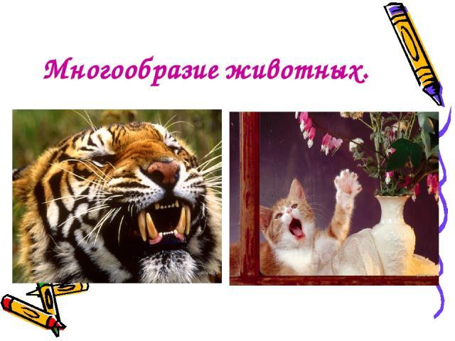 Многообразие животных.