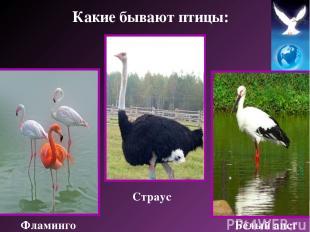 Страус Фламинго Белый аист Какие бывают птицы: