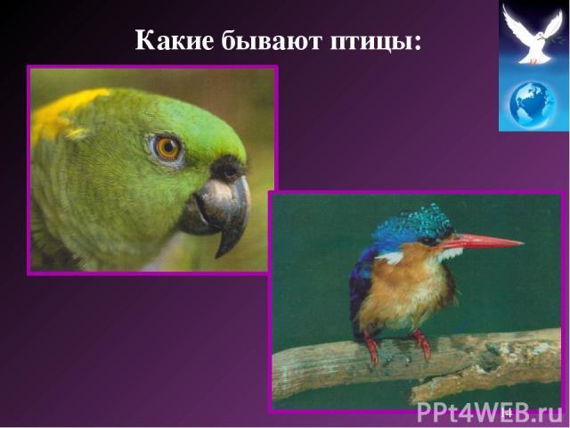Какие бывают птицы: