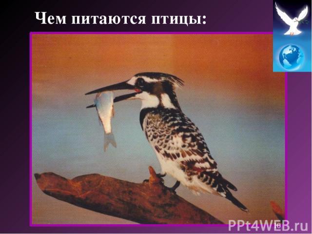 Чем питаются птицы: