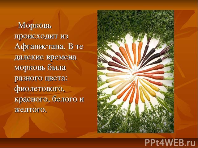 Морковь происходит из Афганистана. В те далекие времена морковь была разного цвета: фиолетового, красного, белого и желтого.