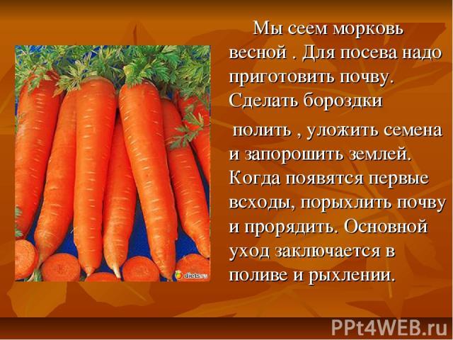 Мы сеем морковь весной . Для посева надо приготовить почву. Сделать бороздки полить , уложить семена и запорошить землей. Когда появятся первые всходы, порыхлить почву и прорядить. Основной уход заключается в поливе и рыхлении.