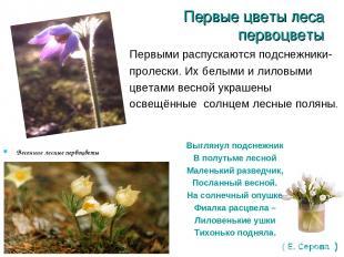 Первые цветы леса первоцветы Весенние лесные первоцветы Первыми распускаются под