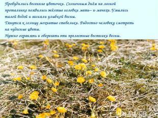 Пробудились весенние цветочки. Солнечным днём на лесной проталинке появились жёл