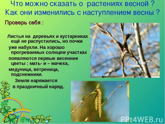 Что можно сказать о растениях весной ? Как они изменились с наступлением весны ?  Проверь себя : Листья на деревьях и кустарниках ещё не распустились, но почки уже набухли. На хорошо прогреваемых солнцем участках появляются первые весенние цветы : …