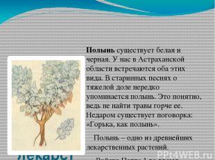 Полынь – одно из древнейших лекарственных растений Полынь существует белая и чер