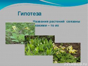 Гипотеза Названия растений связаны с какими – то их особенностями.