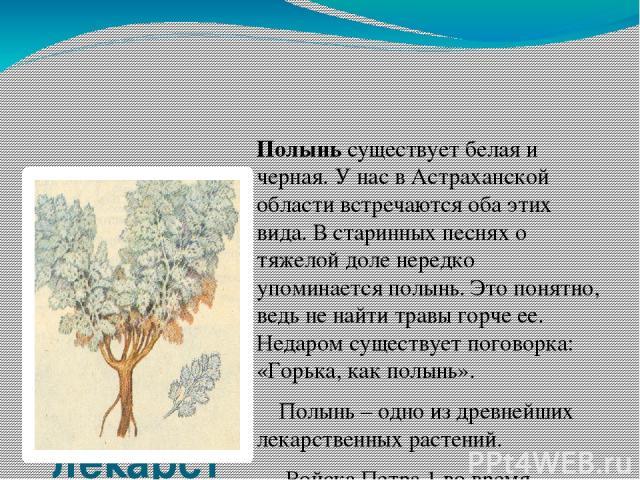 Полынь – одно из древнейших лекарственных растений Полынь существует белая и черная. У нас в Астраханской области встречаются оба этих вида. В старинных песнях о тяжелой доле нередко упоминается полынь. Это понятно, ведь не найти травы горче ее. Нед…