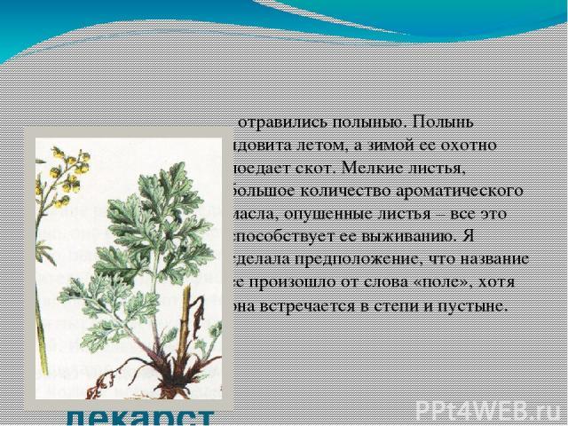 Полынь – одно из древнейших лекарственных растений. отравились полынью. Полынь ядовита летом, а зимой ее охотно поедает скот. Мелкие листья, большое количество ароматического масла, опушенные листья – все это способствует ее выживанию. Я сделала пре…