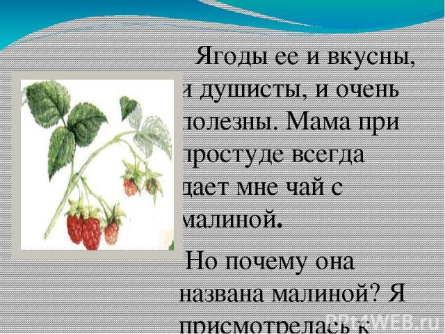 Кто не знает малину ? Ягоды ее и вкусны, и душисты, и очень полезны. Мама при простуде всегда дает мне чай с малиной. Но почему она названа малиной? Я присмотрелась к этой ягоде и заметила, что она состоит из маленьких сросшихся ягодок. Возможно, от…