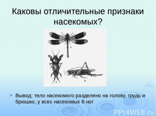 Каковы отличительные признаки насекомых? Вывод: тело насекомого разделено на гол