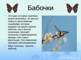 Бабочки Это один из самых красивых видов насекомых. Их крылья покрыты мельчайшим