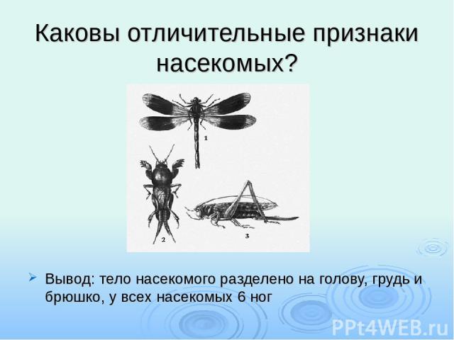 Каковы отличительные признаки насекомых? Вывод: тело насекомого разделено на голову, грудь и брюшко, у всех насекомых 6 ног