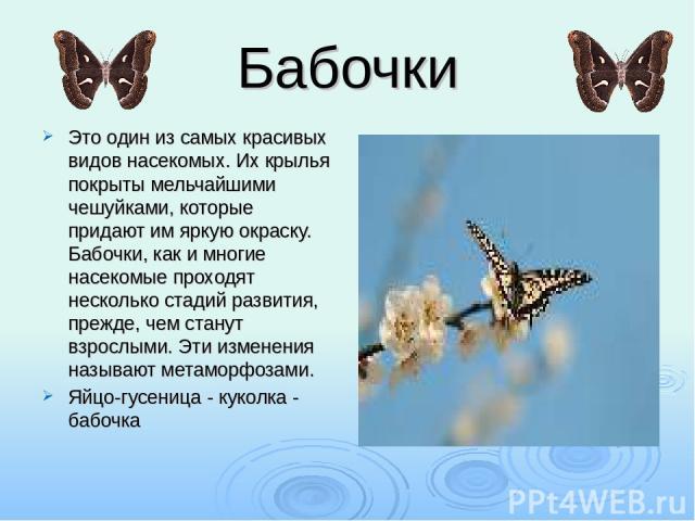 Бабочки Это один из самых красивых видов насекомых. Их крылья покрыты мельчайшими чешуйками, которые придают им яркую окраску. Бабочки, как и многие насекомые проходят несколько стадий развития, прежде, чем станут взрослыми. Эти изменения называют м…