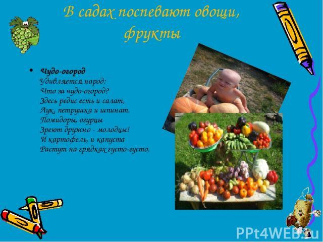 В садах поспевают овощи, фрукты Чудо-огород Удивляется народ: Что за чудо-огород? Здесь редис есть и салат, Лук, петрушка и шпинат. Помидоры, огурцы Зреют дружно - молодцы! И картофель, и капуста Растут на грядках густо-густо.