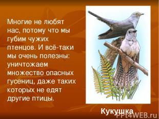 Кукушка Многие не любят нас, потому что мы губим чужих птенцов. И всё-таки мы оч