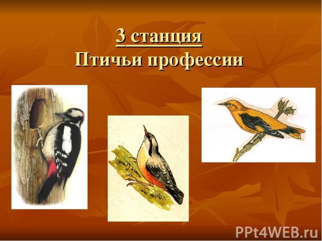 3 станция Птичьи профессии