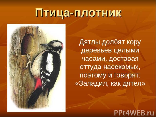 Птица-плотник Дятлы долбят кору деревьев целыми часами, доставая оттуда насекомых, поэтому и говорят: «Заладил, как дятел»