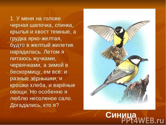 1. У меня на голове черная шапочка, спинка, крылья и хвост темные, а грудка ярко-желтая, будто в желтый жилетик нарядилась. Летом я питаюсь жучками, червячками, а зимой в бескормицу, ем всё: и разные зёрнышки, и крошки хлеба, и варёные овощи. Но осо…