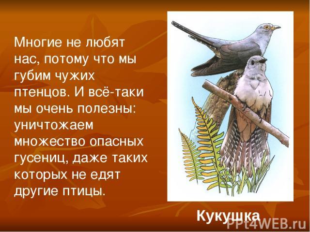 Кукушка Многие не любят нас, потому что мы губим чужих птенцов. И всё-таки мы очень полезны: уничтожаем множество опасных гусениц, даже таких которых не едят другие птицы.
