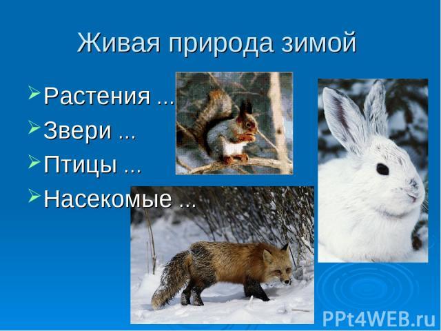 Живая природа зимой Растения … Звери … Птицы … Насекомые …