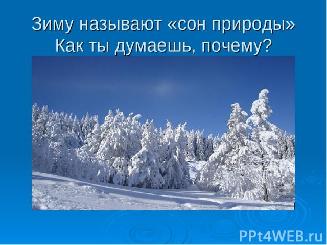 Зиму называют «сон природы» Как ты думаешь, почему?