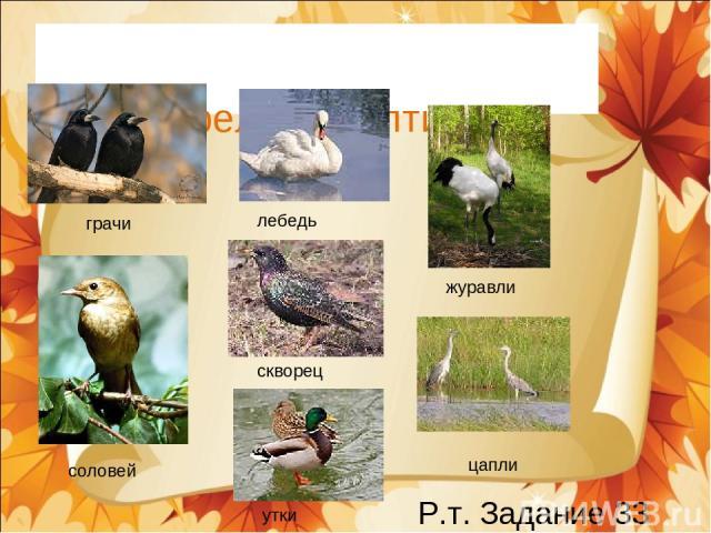 Перелетные птицы грачи журавли соловей лебедь скворец цапли утки Р.т. Задание 33