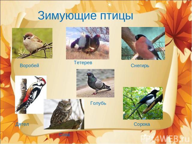 Зимующие птицы Воробей Дятел Тетерев Снегирь Голубь Сова Сорока