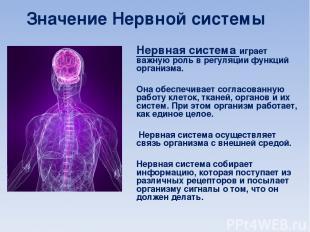 НЕРВНАЯ СИСТЕМА Нервная система играет важную роль в регуляции функций организма