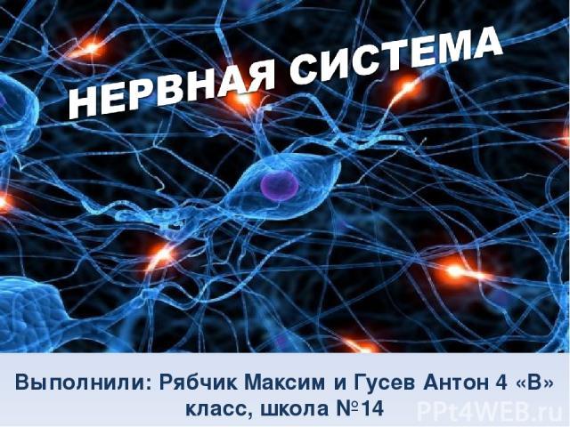 НЕРВНАЯ СИСТЕМА Выполнили: Рябчик Максим и Гусев Антон 4 «В» класс, школа №14