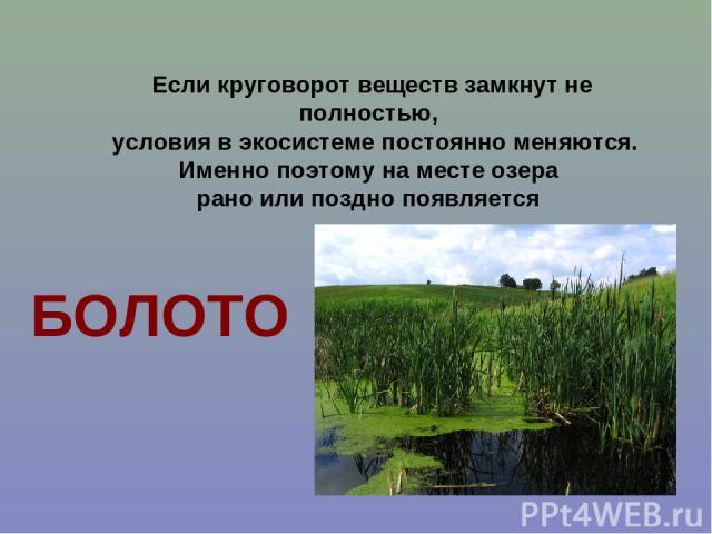 Если круговорот веществ замкнут не полностью, условия в экосистеме постоянно меняются. Именно поэтому на месте озера рано или поздно появляется БОЛОТО