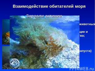* Взаимодействие обитателей моря Водоросли пища и дом для мелких животных; добыв