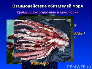 * Взаимодействие обитателей моря Крабы, ракообразные и моллюски: Планктон кормит