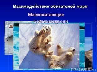 * Взаимодействие обитателей моря Млекопитающие Киты Тюлени Нерпа Моржи Дельфин Б