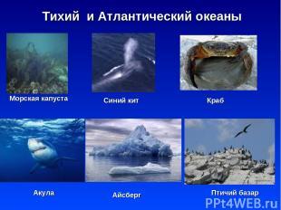 * Тихий и Атлантический океаны Морская капуста Синий кит Краб Акула Птичий базар