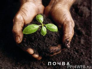 Есть на Земле чудесная кладовая. Положите в нее весной мешок зерна, а осенью, см