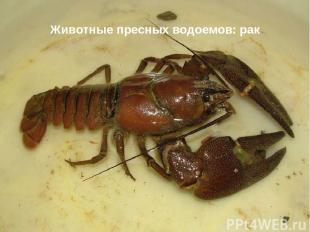 Животные пресных водоемов: рак
