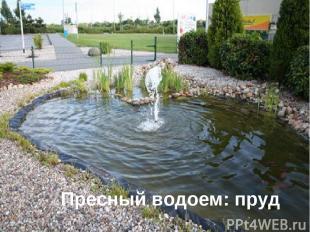 Пресный водоем: пруд