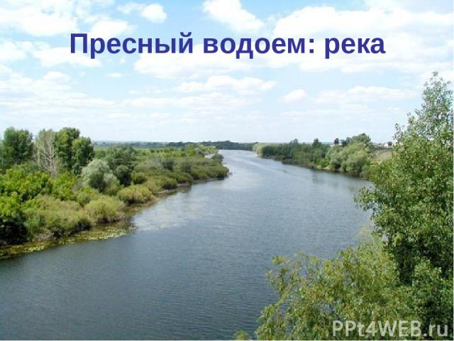 Пресный водоем: река