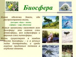 Биосфера Живая оболочка Земли, где распространена жизнь (от греч. «био» – жизнь,