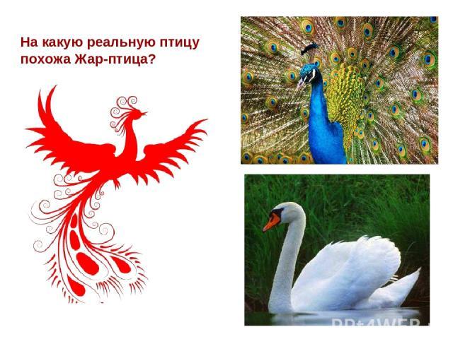 На какую реальную птицу похожа Жар-птица?