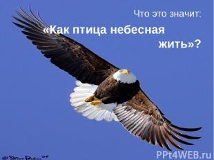 Что это значит: «Как птица небесная жить»?