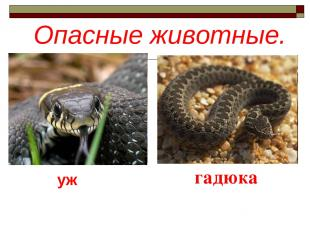 Опасные животные. гадюка уж