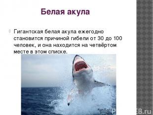 Белая акула Гигантская белая акула ежегодно становится причиной гибели от 30 до