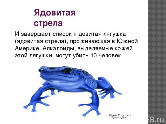 Ядовитая стрела И завершает список я довитая лягушка (ядовитая стрела), проживающая в Южной Америке. Алкалоиды, выделяемые кожей этой лягушки, могут убить 10 человек.