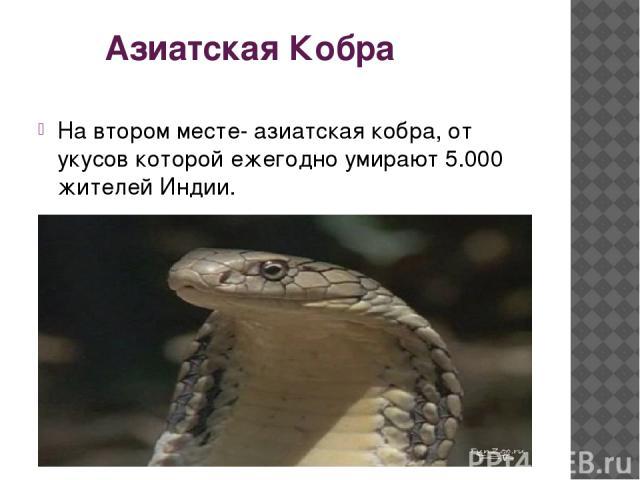 Азиатская Кобра На втором месте- азиатская кобра, от укусов которой ежегодно умирают 5.000 жителей Индии.