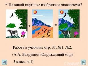 На какой картинке изображена экосистема? + = Работа в учебнике стр. 37, №1, №2.